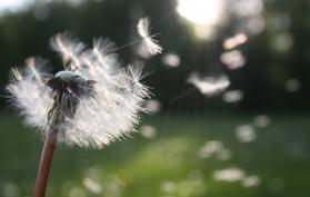 primavera allergie